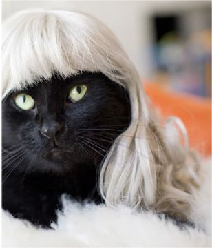 "kitty is wearing the ""silver fox"""