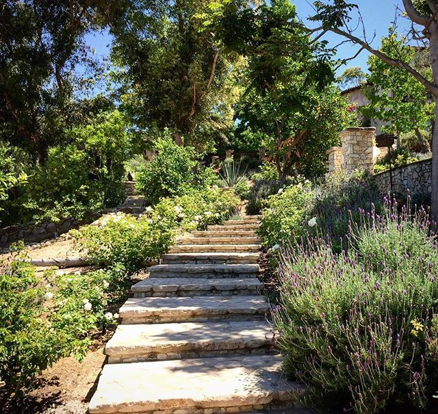 Happy weekend🌿☀️🍃 #outdoorliving #sundiego #garden #landscape #landscapedesigner #beautiful #ranchosantafe #flowers #design #create #creative #vintagereflexions #blessed #encinitas #cactus #summer #succulents #droughttolerant #california #jardin #ranchosantafelocals #sandiegoconnection #sdlocals #rsflocals - posted by J. Ramon Montes  https://www.instagram.com/vintagereflexions. See more post on Rancho Santa Fe at http://ranchosantafelocals.com