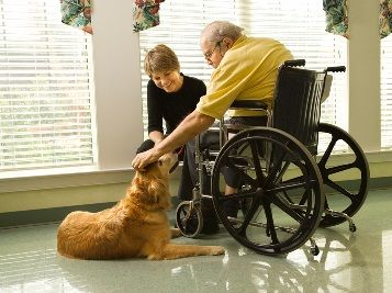 Information for seniors on proper dog care to ensure that your dog remains healthy and happy by your side for many years to come.