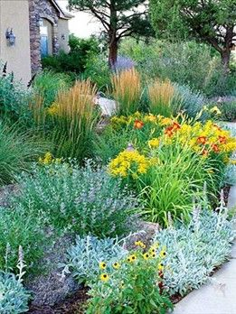 No Lawn, lots of colour and texture