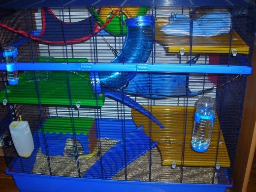 A good pet rat cage should supply lots of space, levels, toys, entertainment, and hideaways. Source: Wikimedia Commons