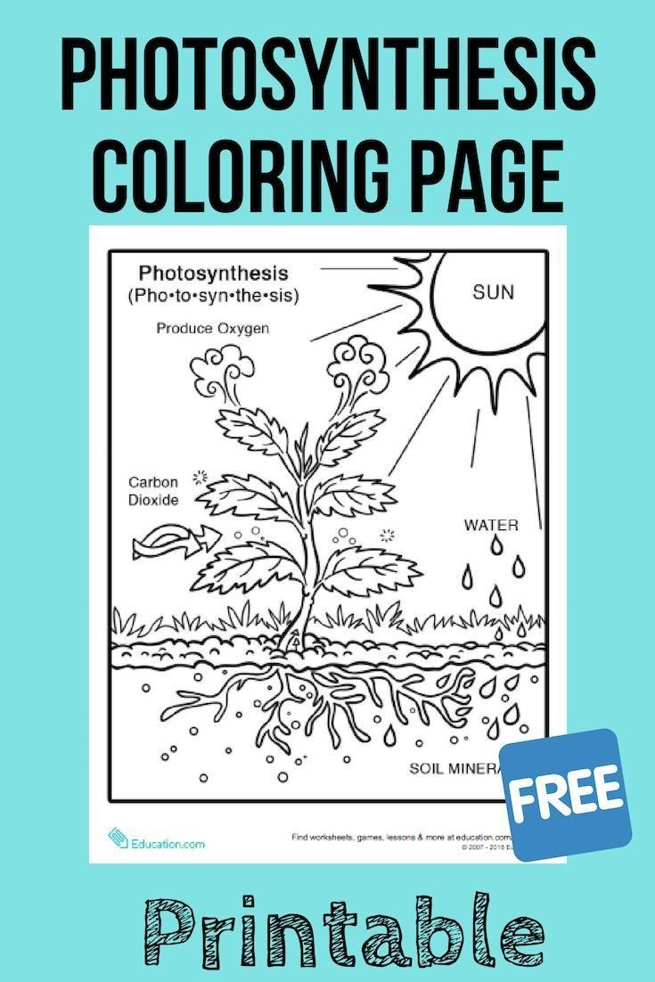 Photosynthesis Activity For Kids Synthesis Coloring Page Photosynthesis Worksheet Photosynthesis Photosynthesis Activities