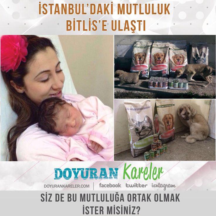 İstanbul'da minik Sıla'nın doğum günü mutluluğu Bitlis'te sokak hayvanlarının karnını doyurdu. @doyurankareler 26 Nisanda minik Sıla'nın doğum günü fotoğraflarını çekecek, ancak mamalar yerine ulaştı bile.