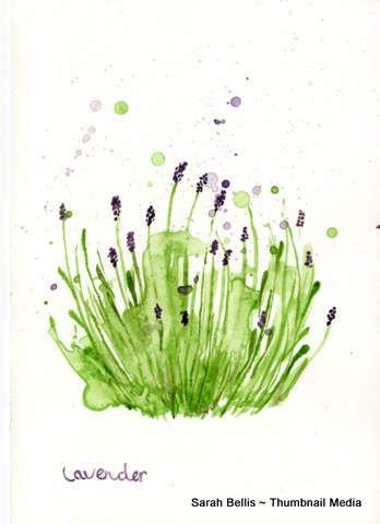 Lavender Plant  Sarah Bellis Designs www.thumbnailmedia.com