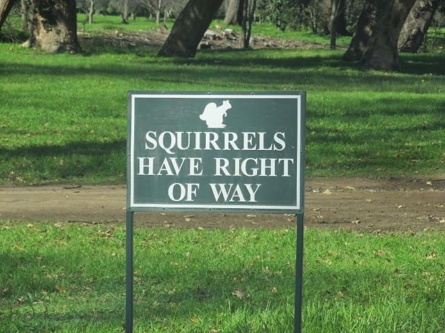Vergelegen Squirrels