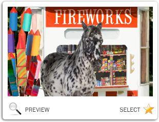 Happy New Year Four Ways pet ecard