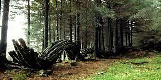 grizedale forest art - Google-søk