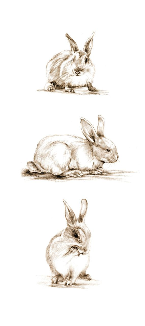 Art Pencil Sketch Rabbit Art Rabbit Sketch Bunny by cmqstudio