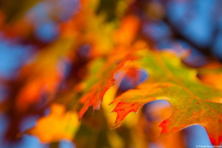 Autumn near Warsaw, Poland