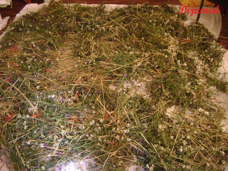 Hayflowers
