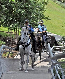Sergeant Leslie Wills & Nacho tackle a staireway on the job.  The Houston Police Department uses Parelli Natural Horsemanship to retrain and rehabilitate future police horses.
