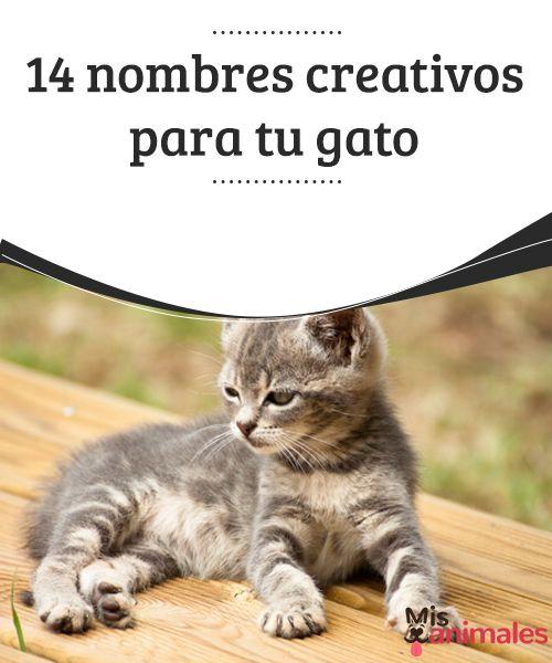 14 nombres creativos para tu gato  Sigue leyendo para conocer los nombres creativos para tu gato. Encontrar un nombre bonito, original y que se adapte a la personalidad puede ser difícil.  #Consejos #Personalidad #Creativos #Gato