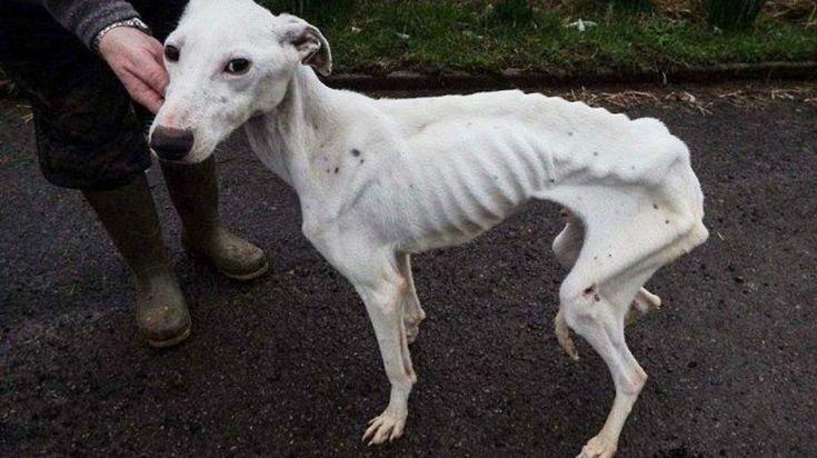https://mur.tv/wp-content/uploads/2016/11/FotorCreated-55-e1480515654803.jpg 18 недель тюрьмы за то, что она сделала с собакой ЭТО! - https://mur.tv/2016/11/30/18-nedel-tyurmy-za-to-chto-ona-sdelala-s-sobakoj-eto/