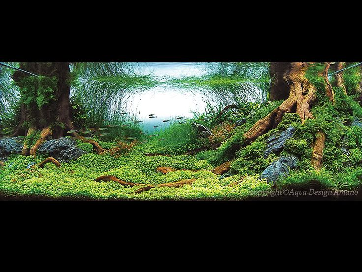 Rainforest Inspired (Tree Roots Aquascape) Photo: This Photo was uploaded by zhixiankoh. Find ...