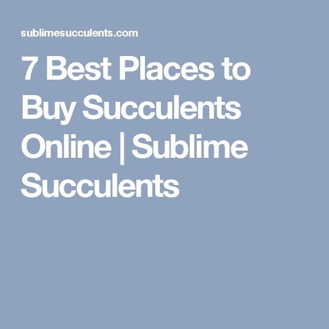 7 Best Places to Buy Succulents Online | Sublime Succulents
