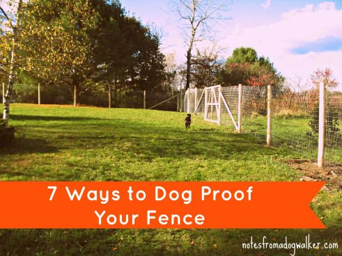 7 ways to dog proof fence (and more!)
