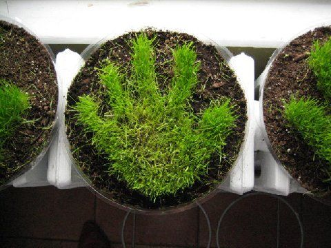 Teach children how to take care of a plant by growing this fun grass handprint - makes a great gift for grandparents. (30 family-points.com - unity, learning, service)
