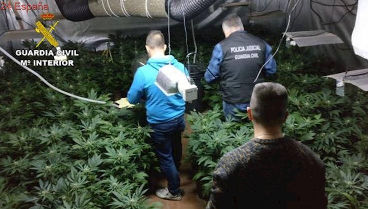 Una pelea por la propiedad de la droga destapa 300 plantas de marihuana escondidas en un sótano