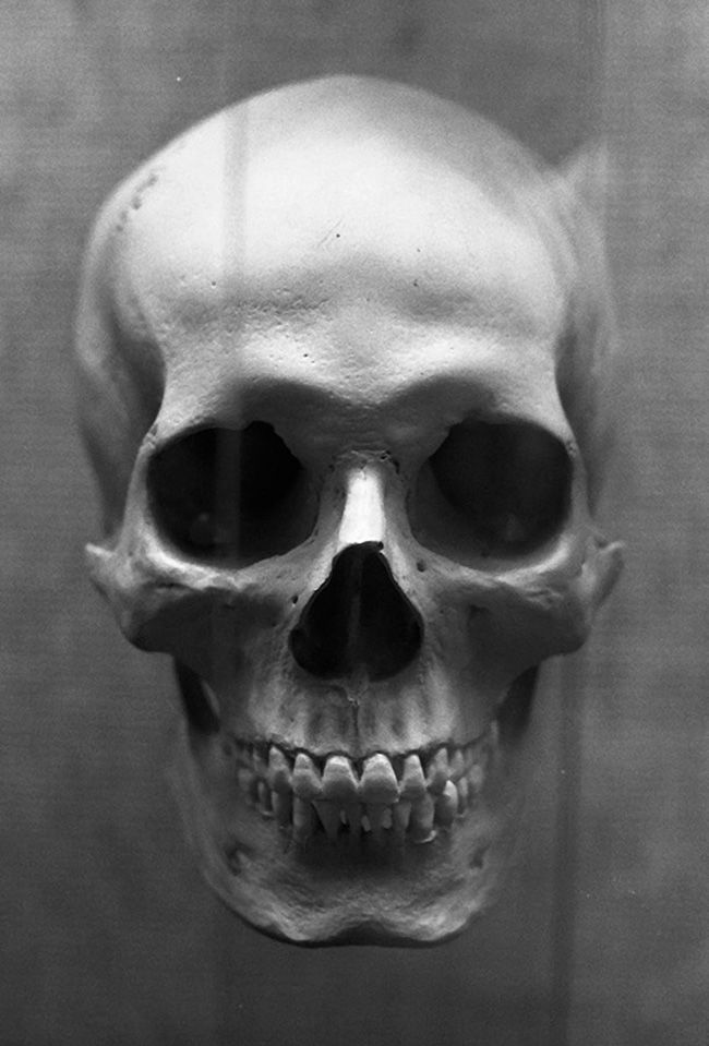 Human Jaw Tattoo: 131 Best MY Skull Anatomy Images On Pinterest