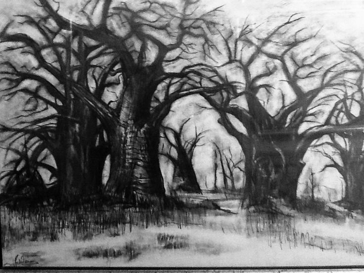 Jean Weir (pencil and turps) Baobabs Botswana