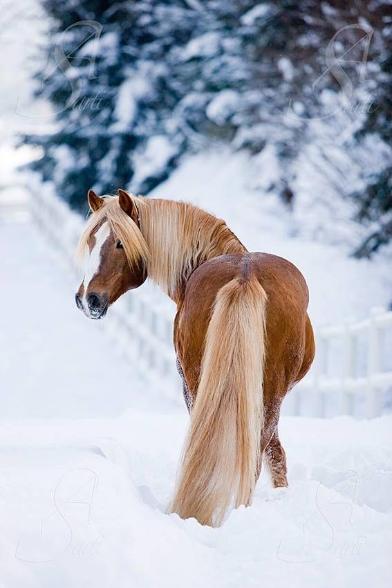 Cute horse in the snow. Al-Qahira Kutschen- und Schlittenfahrten Foto by Alessandra Sarti