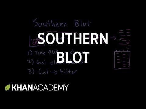 Southern blot (video) | DNA technology | Khan Academy