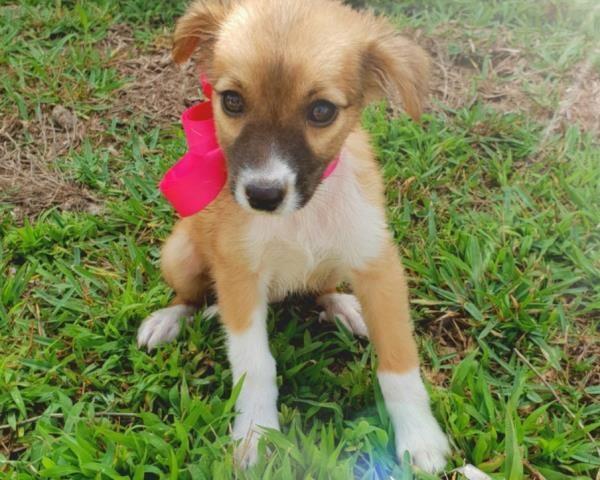 Regalo Cani Taglia Piccola Cuccioli poco più di due mesi, maschi e femmine