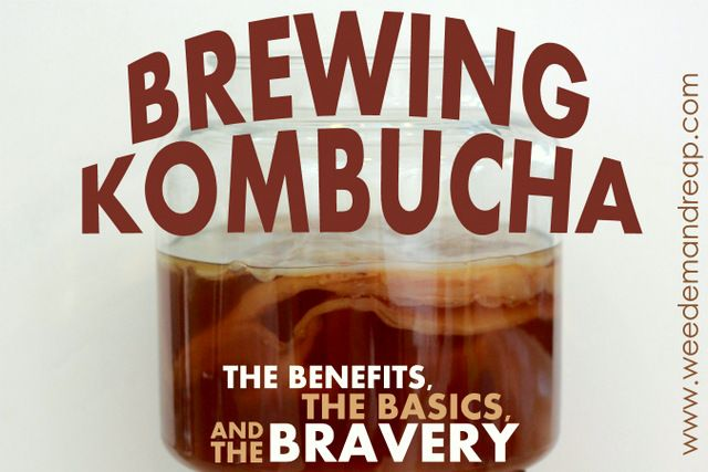 Brewing Kombucha: The Benefits, The Basics & The Bravery CLICK HERE: http://www.weedemandreap.com/2013/10/brewing-kombucha-tea-basics-benefits-bravery.html
