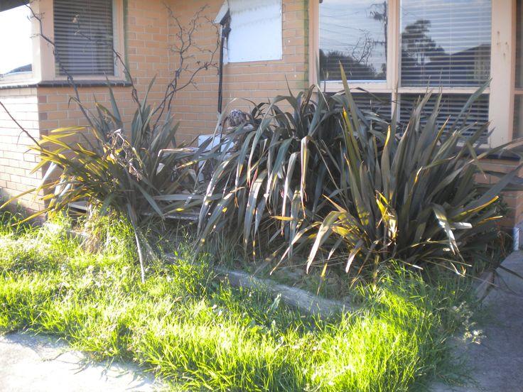 Front Window Garden (Mar 13)