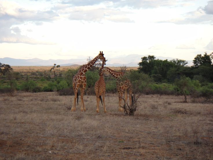 @ Samburu Game Reserve