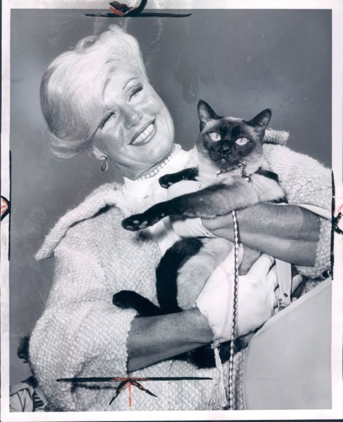 Diana Dors with siamese cat