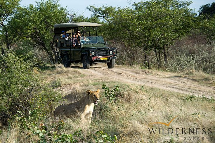 Ongava Lodge - Guided morning and afternoon/evening game drives take place on the 30 000 hectare private Ongava Game Reserve  #Africa #Safari #Namibia