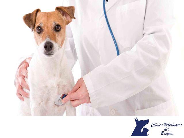 CLÍNICA VETERINARIA DEL BOSQUE. El moquillo, es una enfermedad que afecta las vías respiratorias y sistema nervioso de tu mascota. Por esta razón, es importante que desde que es cachorro, lo lleves a atender con un médico veterinario, para que te indique un correcto esquema de vacunación para evitar que ésta y otras enfermedades puedan afectar a tu mascota. #mascotassaludables