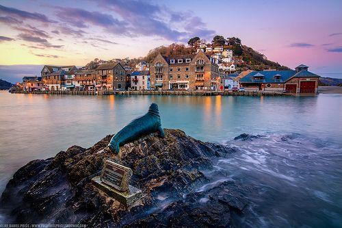 Nelson the Seal, Looe, Cornwall, England