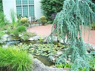 Small Garden Pond Design - Bing Images