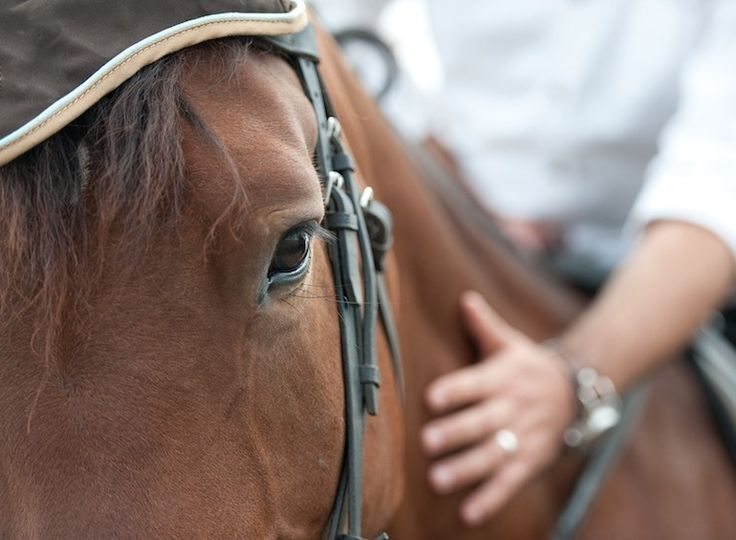Quit kidding yourself about what your horse really thinks of you..