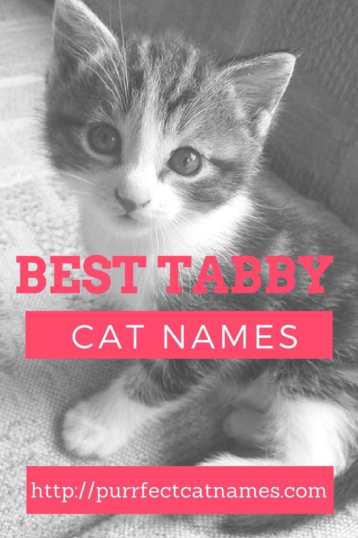 Best 25 Tabby cat names ideas on Pinterest