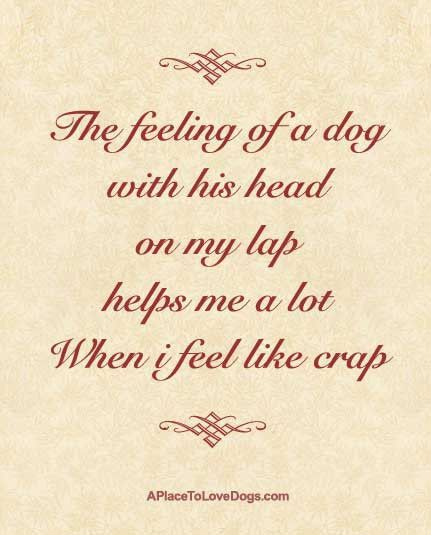 My Dog Loves Me Quotes: 143 Best Images About Dog Quotes On Pinterest