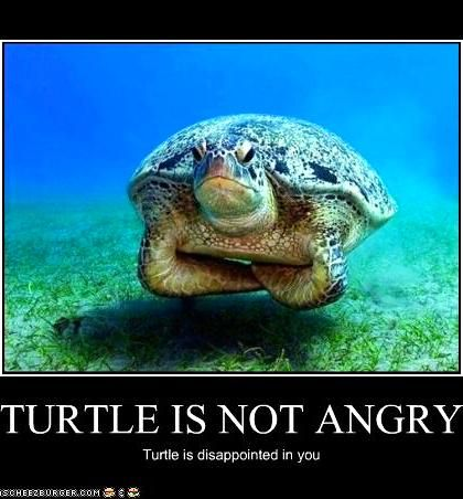 Oh no! Nothing stings like knowing turtles are disappointed in you.