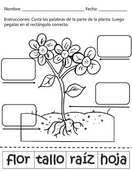 Plant Parts / Partes de una Planta - Dual Language English & Spanish