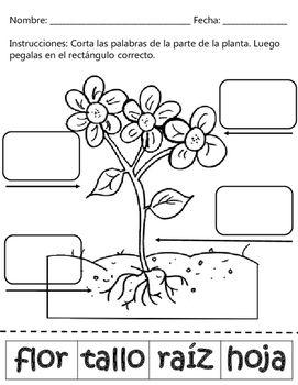 Plant parts partes de una planta dual language english for Las partes de un arbol en ingles