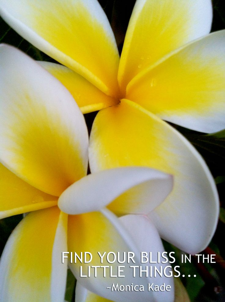 Find bliss in the little things - Monica Kade