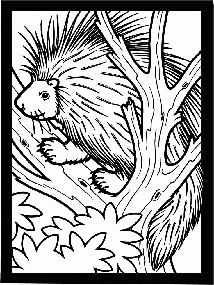 15 Things You Should Know Before Embarking On Coloring Page Porcupine Coloring Coloring Pages Line Artwork Online Coloring Pages