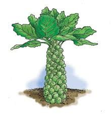 Image result for sprout plant