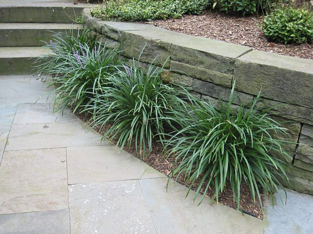 1000 images about ornamental grass ground covers on for Tall border grass