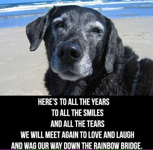 Sympathy Dog Quotes: Best 25+ Short Condolence Message Ideas On Pinterest