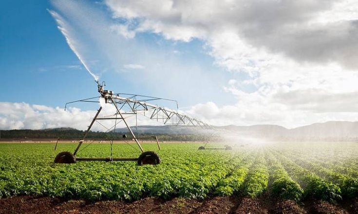 UCL The Bartlett Review:   Gone to ground  Today's food system is depleting groundwater reserves faster than they can be replenished. What happens next could determine the future of global food security.  Words: Sophie Arie