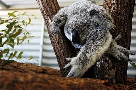 Planning your Trip to the Australia Zoo on your Sunshine Coast Holiday