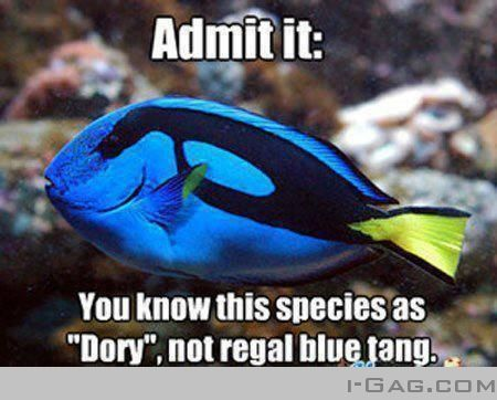 "I do that!!!!!! I also do it with ""Nemo's"" (clown fish) I look into a tank and say ""oh look there is a dory and nemo!"""
