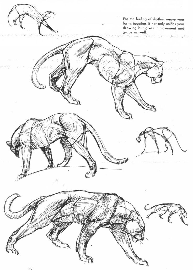 1000+ ideas about Animal Drawings on Pinterest | Awesome drawings ...